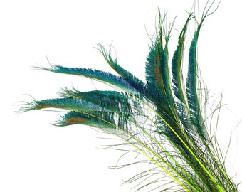 "Peacock Sword Stem Dyed Feathers, 10 to 100 pieces 15-25"" - LIME Green, Floral Decor, Millinery, Jewelry Design ZUCKER® Sanitized in USA"