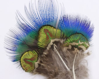 Peacock Feathers, Natural Blue and Green Gold Peacock Plumage, Loose Peacock Plumage Feathers, Small Golden Peacock Plumage ZUCKER®