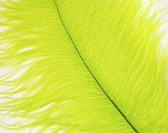 """LIME 25 Ostrich Feathers 17""""- 20"""" - 25pc/pkg - Perfect for Feather Centerpieces,Party Decor,Millinery & Carnival Costumes ZUCKER®"""