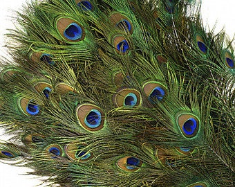 """BULK 25-35"""" Natural Peacock Feathers 100pc/pkg - NATURAL Peacock Tail Feathers with Large Iridescent Eyes ZUCKER™"""