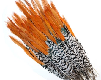 "Lady Amherst Pheasant Feathers, 10-12"" Natural Pheasant Orange Top, Loose Feathers For Jewelry Making, Crafting and Art Supplies ZUCKER®"