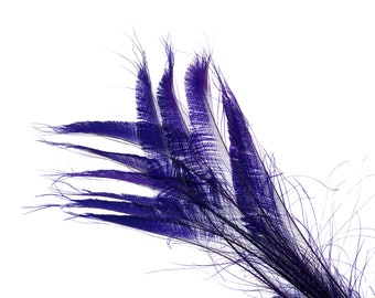 "REGAL 10pc/pkg 15-25"" Bleach Dyed Peacock Sword Feathers - For Arts & Crafts, Floral Decor, Millinery and Jewelry Design ZUCKER®"