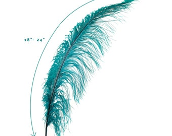 "Ostrich Feathers, Teal Ostrich Feather Spads 18-24"", Centerpiece Floral Supplies, Carnival & Costume Feathers ZUCKER®"