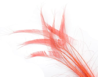 "CORAL 10pc/pkg 15-25"" Bleach Dyed Peacock Sword Feathers - For Arts & Crafts, Floral Decor, Millinery and Jewelry Design ZUCKER®"