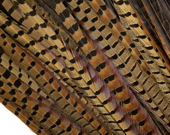 "Pheasant Feathers - Long Male Tail Feathers 16-18""  - Natural Color Ringneck Pheasant Tail Feathers  ZUCKER®"