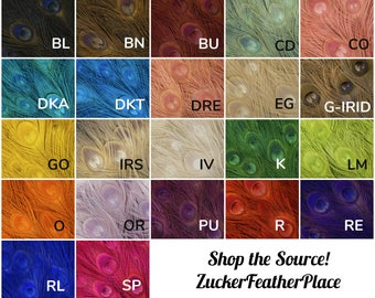 "25pc/pkg 8-15"" Bleach Dyed Peacock Tail Feathers - Bleach Dyed Short Peacock Eye Tail Feathers ZUCKER™"