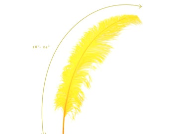 "Ostrich Feathers, Gold Ostrich Feather Spads 18-24"", Centerpiece Floral Supplies, Carnival & Costume Feathers ZUCKER®"