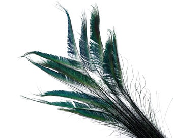"BLACK 10pc/pkg 15-25"" Stem Dyed Peacock Sword Feathers - For Arts & Crafts, Floral Decor, Millinery and Jewelry Design ZUCKER®"