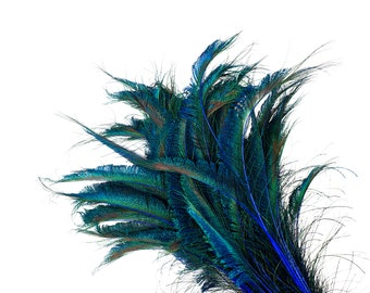 "ROYAL 10pc/pkg 15-25"" Stem Dyed Peacock Sword Feathers - For Arts & Crafts, Floral Decor, Millinery and Jewelry Design ZUCKER®"