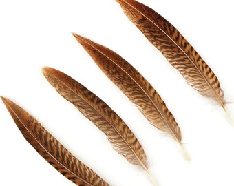 "Natural Tail Feathers - Short Golden Pheasant 4-6""  - Natural Color Golden Pheasant Tail Feathers ZUCKER®"