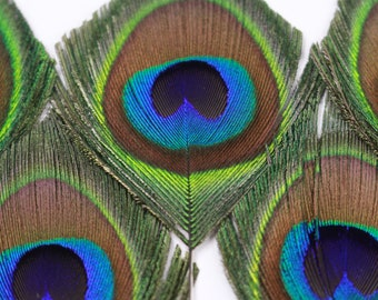 "Peacock Small Eyes Trimmed 2-3.5"" - 5 pieces, Mini Natural Peacock Feathers Cut for Accessory & Jewelry Feathers, ZUCKER® Dyed Sanitized USA"