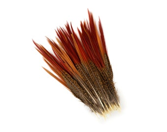 "Golden Pheasant Feathers, 10PCS 8-10"" Natural  Pheasant Red Tip Loose Feathers For Crafting and Art Supplies ZUCKER®"