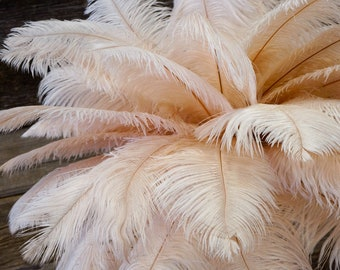 "Ostrich Feathers 17-20"" Champagne, 1 to 25 pcs, Ostrich Plumes, Carnival Samba, Ostrich Drab, Mardi Gras, Centerpieces, Pink, ZUCKER®"
