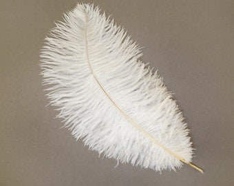"12 IVORY 13-16"" Ostrich Feathers - Perfect for Medium Feather Centerpieces & Bouquets, Party Decor, Millinery and Costume Design ZUCKER®"
