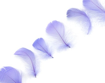 "Goose Coquille Feathers, 3-5"" Lavender Loose Goose Feathers, Small Feathers, Arts and Craft Supplies ZUCKER®"