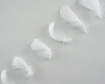 "Goose Coquille Feathers, 3-5"" White Loose Goose Feathers, Small Feathers, Arts and Craft Supplies ZUCKER®"