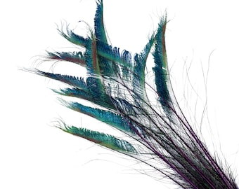 "Peacock Sword Stem Dyed Feathers, 10 to 100 pieces 15-25"" - REGAL Purple, Floral Decor, Millinery, Jewelry Design ZUCKER® Sanitized in USA"