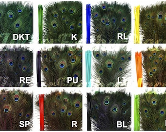 10pc/pkg Dyed Peacock Tail Feathers - 30-35 inches Stem Dyed Peacock Tail Feathers with Large Iridescent Eyes ZUCKER®