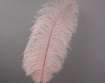 "12 CHAMPAGNE 17""+ Ostrich Feathers 1DZ - Perfect for Large Feather Centerpieces, Party Decor, Millinery, Carnival & Costume Design ZUCKER®"