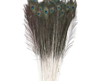 "BULK 25-35"" Natural Peacock Feathers 100pc/pkg - NATURAL Peacock Tail Feathers with Large Iridescent Eyes ZUCKER®"