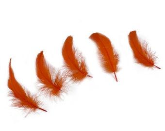 "Goose Nagoire Feathers, 4-6"" Orange Loose Goose Nagoire Feathers, Small Feathers, Arts and Craft Supplies ZUCKER®"