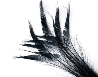 "BLACK 10pc/pkg 15-25"" Bleach Dyed Peacock Sword Feathers - For Arts & Crafts, Floral Decor, Millinery and Jewelry Design ZUCKER®"