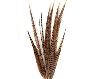 Long Pheasant Feathers, 16-30 inch Natural Ringneck & Golden Assorted Pheasant Tail Feathers 10 Pieces