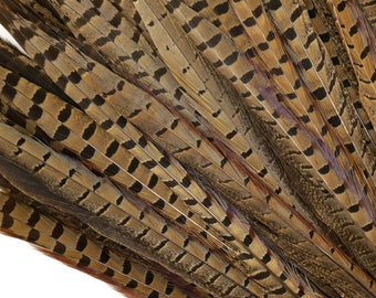 "Pheasant Feathers - Short Male Tail Feathers 12-14""  - Natural Color Ringneck Pheasant Tail Feathers  ZUCKER®"