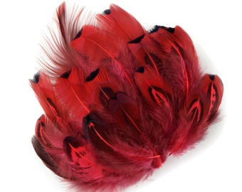 Pheasant Feathers, Dyed Coral Heart Pheasant Plumage, Loose Short Natural Feathers for DIY Jewelry, Crafting & Fly Tying  ZUCKER®