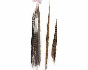 "16-30"" Natural Ringneck & Golden Assorted Pheasant Tail Feathers 10PC/PKG B574N-10 ZUCKER®"