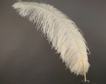 "Large Ostrich Feathers 1 Piece 17-25"" Prime Ostrich Femina Wing Plumes IVORY, Wedding Centerpiece, Carnival Feathers ZUCKER® USA"