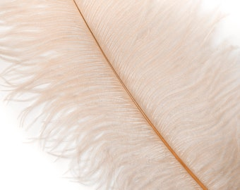 """BEIGE 25 Ostrich Feathers 17""""- 20"""" - 25pc/pkg - Perfect for Feather Centerpieces,Party Decor,Millinery & Carnival Costumes ZUCKER®"""