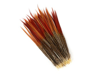 "Golden Pheasant Feathers, 10-12"" Natural  Pheasant Red Tip Loose Feathers For Crafting and Art Supplies ZUCKER®"