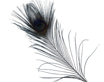 "BLACK 25pc/pkg 8-15"" Bleach Dyed Peacock Tail Feathers - Bleach Dyed Short Peacock Eye Tail Feathers ZUCKER®"