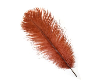 "12 COPPER 13-16"" Ostrich Feathers - Perfect for Medium Feather Centerpieces & Bouquets, Party Decor, Millinery and Costume Design ZUCKER®"