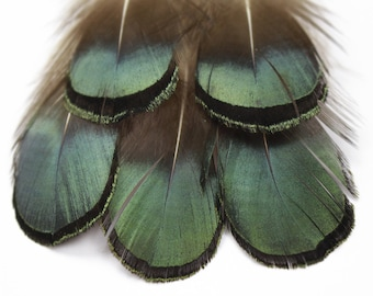 "Green Bronze Lady Amherst Pheasant Plumage Feathers 1-2"", Bulk .10 oz  (80-100pcs), Jewelry, Craft & Fly Tying ZUCKER® Sanitized in USA"