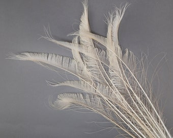 "IVORY 10pc/pkg 15-25"" Bleach Dyed Peacock Sword Feathers - For Arts & Crafts, Floral Decor, Millinery and Jewelry Design ZUCKER®"