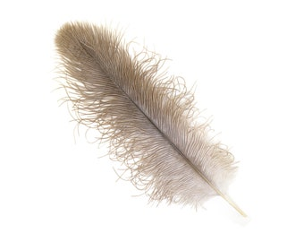 "12 NATURAL 13-16"" Ostrich Feathers - Perfect for Medium Feather Centerpieces & Bouquets, Party Decor, Millinery and Costume Design ZUCKER®"