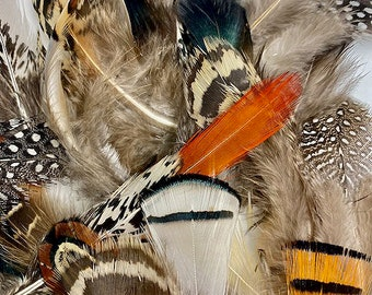 Feathers, Assortment of Natural Feathers, Pheasant Feathers, Guinea Feathers, Partridge Feathers - 40 Pieces Short Natural Plumage ZUCKER®