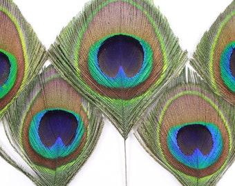 """Peacock Large Eyes Trimmed 3-4.5"""" - 5 Pieces, Mini Natural Peacock Feathers Cut for Accessory & Jewelry Feathers, ZUCKER® Dyed Sanitized USA"""