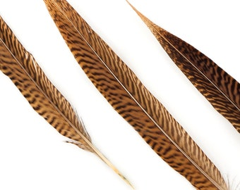 "Natural Tail Feathers - 10PCS Short Golden Pheasant 10-12"" - Natural Color Golden Pheasant Tail Feathers ZUCKER®"