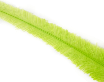 "Ostrich Nandu Feathers, Lime Ostrich Feather Nandus 13-24"", Wholesale Carnival & Costume Feathers ZUCKER®"