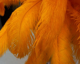 "Ostrich Feathers 17-20"" MANGO, 1 to 25 pcs, Ostrich Plumes, Carnival Samba, Ostrich Drab, Mardi Gras, Centerpieces, Feather Fan ZUCKER® USA"