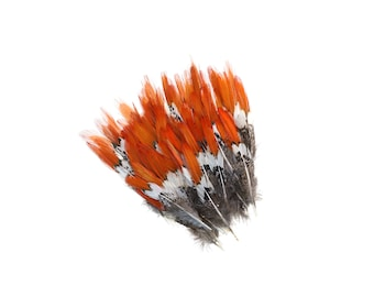 "Lady Amherst Pheasant Feathers, 4-6"" Natural Pheasant Orange Top, Loose Feathers For Jewelry Making, Crafting and Art Supplies ZUCKER®"