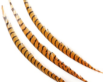 "Orange Pheasant Tail Feathers, 20-40"" Lady Amherst Pheasant Center Tail Feathers 3 pieces Carnival Costume Design & Cultural Arts  ZUCKER®"