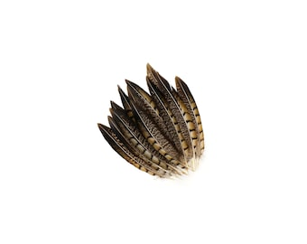 "Tail Feathers, 12 pcs Natural 6-8"" Lady Amherst Pheasant Feathers For Millinery, Fashion, Cultural Arts & Carnival Costume Design ZUCKER®"