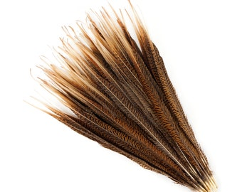 "Natural Tail Feathers - Long Golden Pheasant 18-20"" - Natural Color Golden Pheasant Tail Feathers ZUCKER®"