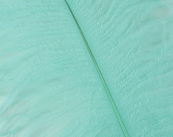 """MINT 25 Ostrich Feathers 17""""- 20"""" - 25pc/pkg - Perfect for Feather Centerpieces,Party Decor,Millinery & Carnival Costumes ZUCKER®"""