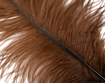 """BROWN 25 Ostrich Feathers 17""""- 20"""" - 25pc/pkg - Perfect for Feather Centerpieces,Party Decor,Millinery & Carnival Costumes ZUCKER®"""