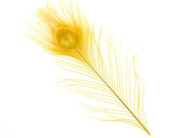 "GOLD 25pc/pkg 8-15"" Bleach Dyed Peacock Tail Feathers - Bleach Dyed Short Peacock Eye Tail Feathers ZUCKER™"
